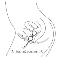 Musculospc